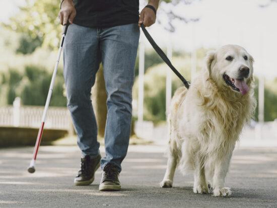 en la imagen se muestra una persona con perro lazarillo.